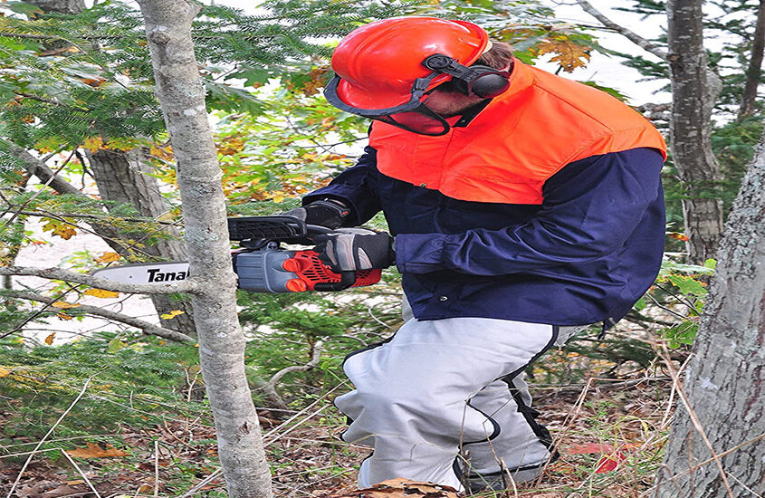 Best Small Chainsaw Reviews and Buying Guide